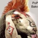 download bakra eid funny wallpapers 2014