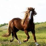 Brown horse pics