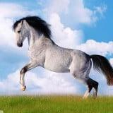 white horse running wallpapers